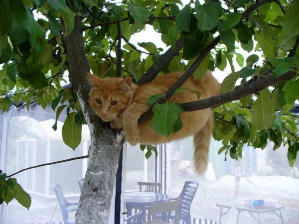 фото кот на дереве